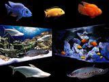 Рыбки,акварастения ,дизайн и обслуживание аквариумов