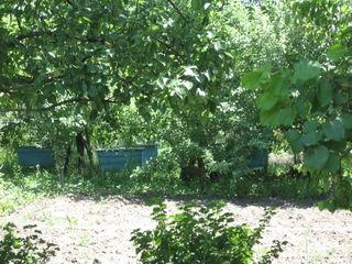 продается дачный участок 18 км от кишинева