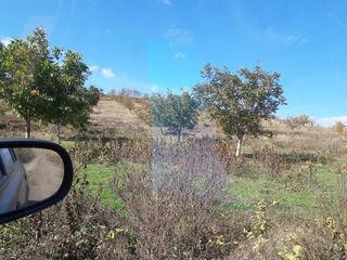 45.5 ha teren arabil cu plantatie de nuci 26 ha