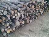 lemne orhei