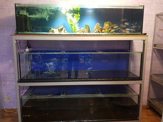 стойка с аквариумами ( 495 лит. каждый )