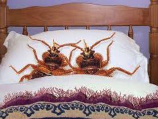 Истребление постельных клопов. Nimecirea plosnitei de pat
