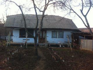 Vind urgent casa in Pitusca