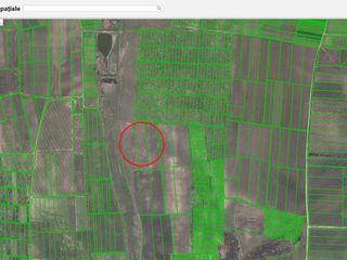 Vînd teren agricol 2,29 ha în Sîngera - achitare în rate de la proprietar