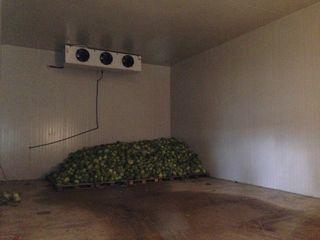Magdacesti - frigider + teren - 0.54ha