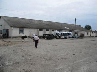 Complexul de producere cu teren aferent,r-ul Edineț, s. Bădragii Noi.