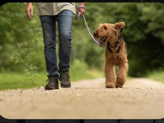 Гуляем с собаками любой породы!