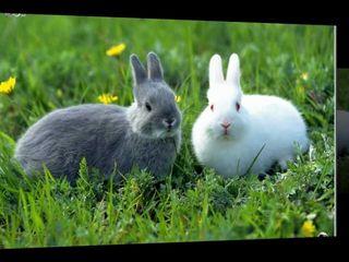 Nutret granulat la Iepuri si chincinlla (Гранулированный нутрет для кроликов и шиншилл)