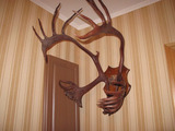 Рога оленя на деревянном пано