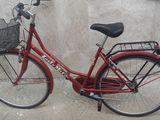 Vîd bicicletă