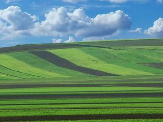 Cumpar teren arabil Nisporeni