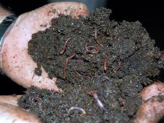 Îngrăşămint natural organic. Biovit pe baza de biohumus. Agricultura Ecologică!
