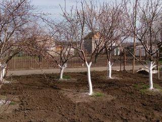 Чистка деревьев curatarea copacilor