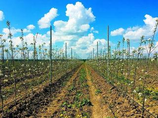 Продается земля в черте города Кагул (8 гектар)