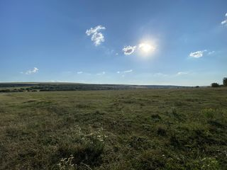 6 hectare cu destinatie agricola consolidate Hrusova