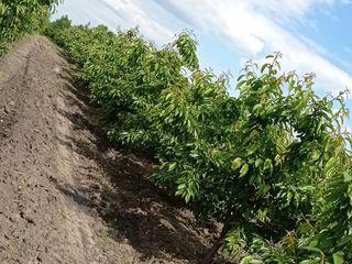 Se vinde livada 10 hectare