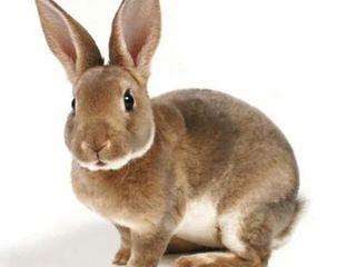 Куплю мясо кролика !!!