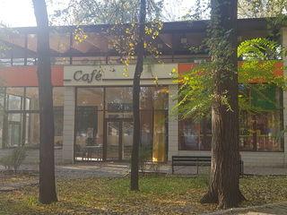 Сдается действующее кафе с терассой