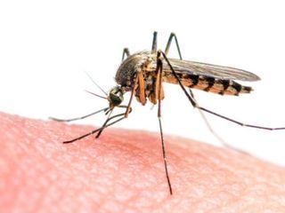 таблетки Фумигатор прибор kерамический против комаров