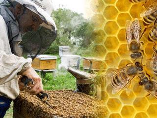 Кредиты для пчеловодов.