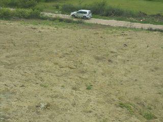 6 соток, дачный , в кооперативе через Думбраву , 200 м от асфальта по щебеночной дороге