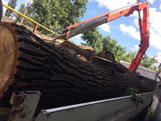 Taierea lemnelor la domiciliu, defrisarea padurilor, aranjarea spatiilor verzi, lucrari la inaltime