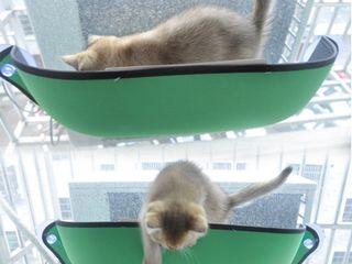 Гамак для кошки - то что ей действительно нужно!