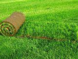 Газоны!  Посевной газон, рулонный газон. Уход за газоном.