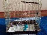 Продам клетку для попугаев б/у в отличном состоянии за 300 лей.