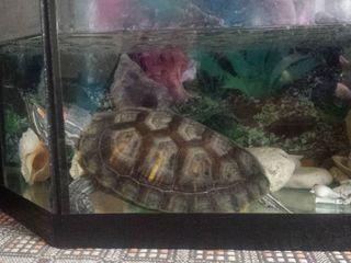 Продам черепаху вместе с аквариумом