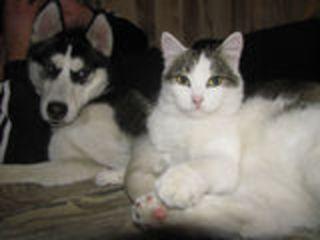 Гостиница для кошек и собак !!! Ветеринарная клиника
