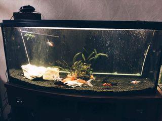 Продам панорамный аквариум 240 литров (122 50 30)