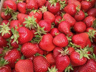 Răsad căpșună cleri