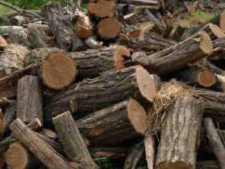 Cele mai bune prețuri la lemn de foc