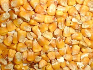 Кукуруза, porumb 12 tone. 3 lei/kg