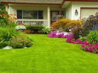 Качественный   уход за вашим газоном, своевременная  подкормка, выведение сорняков, .......