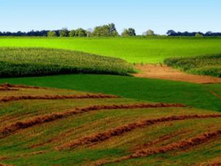 Teren agricol-15 ha! Urgent!