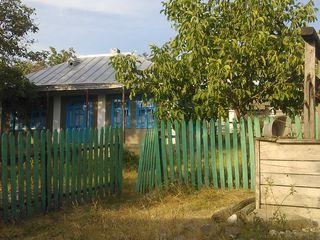 виноградник 40 соток,колодец во дворе,фруктовые деревья,торг
