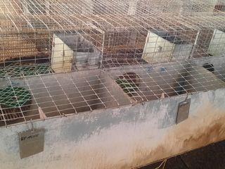 Custi pentru iepuri 1500 lei pentru fatare