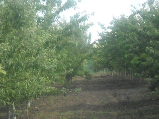 Se vinde urgent 1.4ha de teren agricol!!!