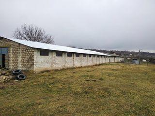 Călărași, construcție agricolă cu teren 30 ari