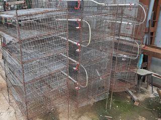 Cusca pentru pasari si animale! 5 bucati cu 5 nivele!