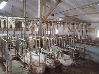 De vînzare fermă de porcine, or. Călărași 2300 mp.