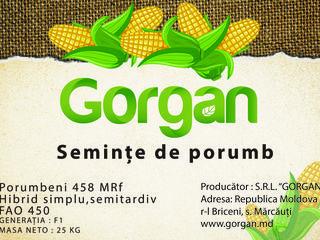 "Compania ""Gorgan"" S.R.L. ofera seminte de porumb: Porumbeni 458MRf."