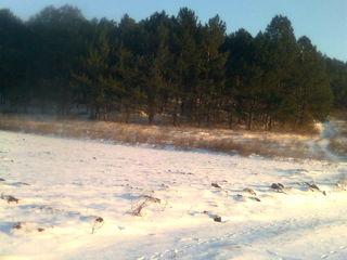 Sector linga padurea de pini,traseul Chisinau-Orhei.