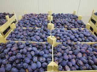 Prune Bluefree 3 paleti x 900-950 kg