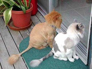 Стерилизация  кастрация животных