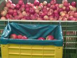 Пластиковые контейнеры для фруктов и овощей из Италии