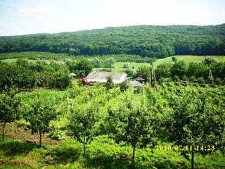 Se vinde casă cu 76 ari, teren îngrădit, zonă pitorească, preț negociabil.