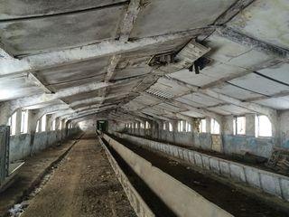 Depoit in Stauceni 1000 m2 + teren 0.5ha